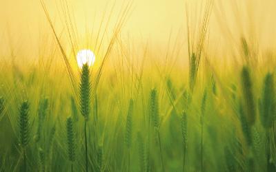 Można handlować – ziemia w obrocie