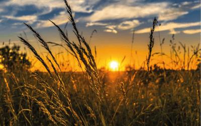Wsparcie dla rolnictwa – nowe elementy