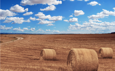 Spadek produkcji rolnej