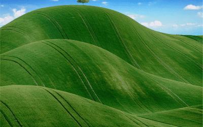 Rolnictwo w dobrej kondycji
