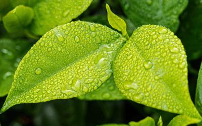 Eksport produktów ekologicznych do UE