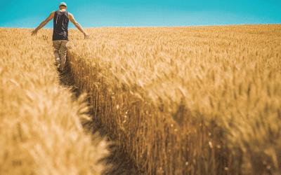 Rolnicy z niższym VAT