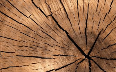 Sprzedaż drewna przez Prozorro
