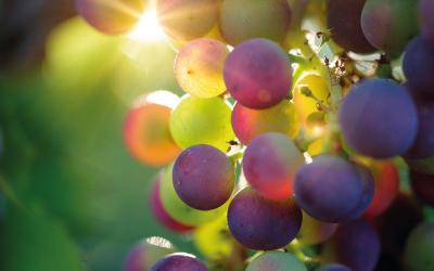 Będzie Dzień Winiarza