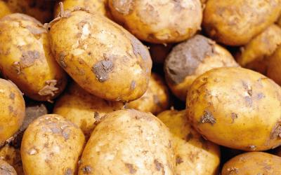Ukraina importuje polskie ziemniaki