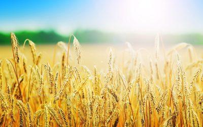 Nowy reformator sektora rolnego