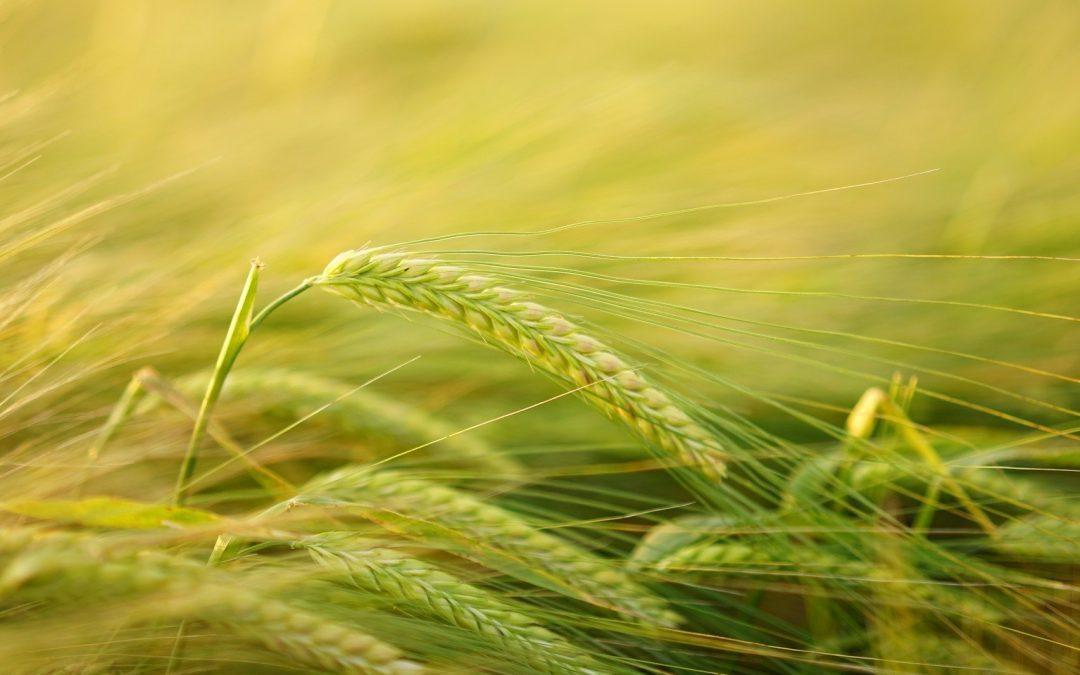 Większy import produktów rolnych