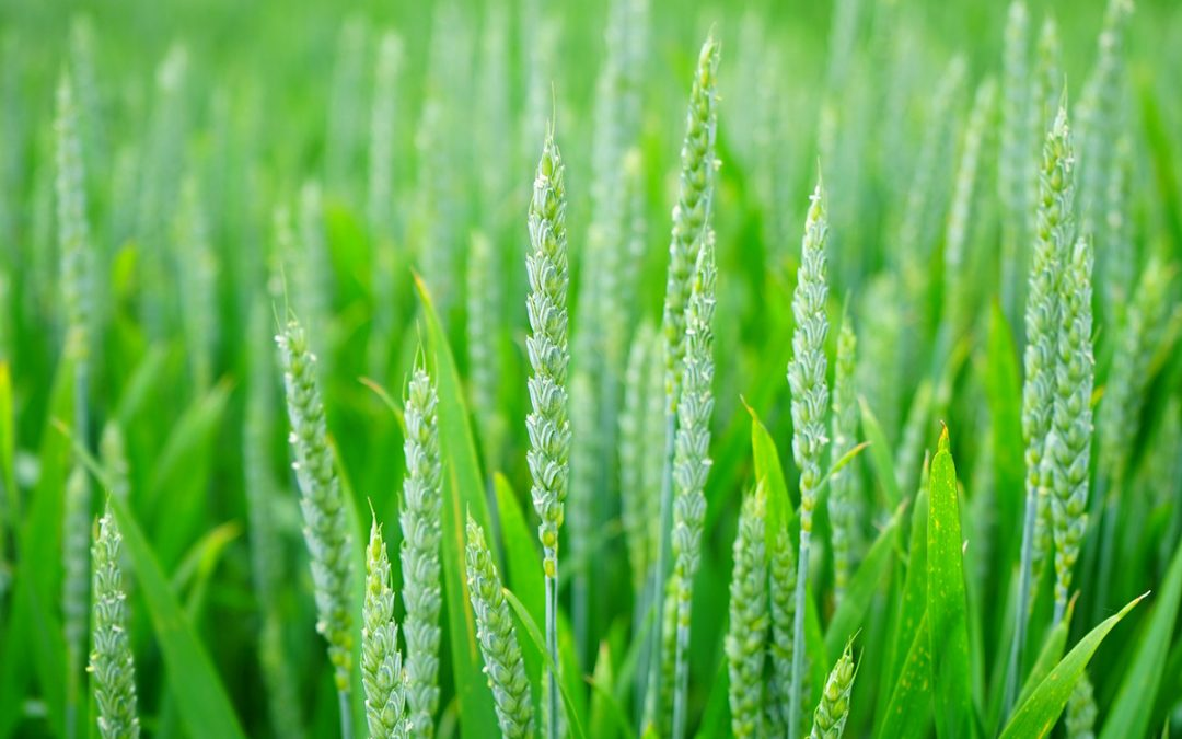 Rolniczy import z obniżonym VAT-em