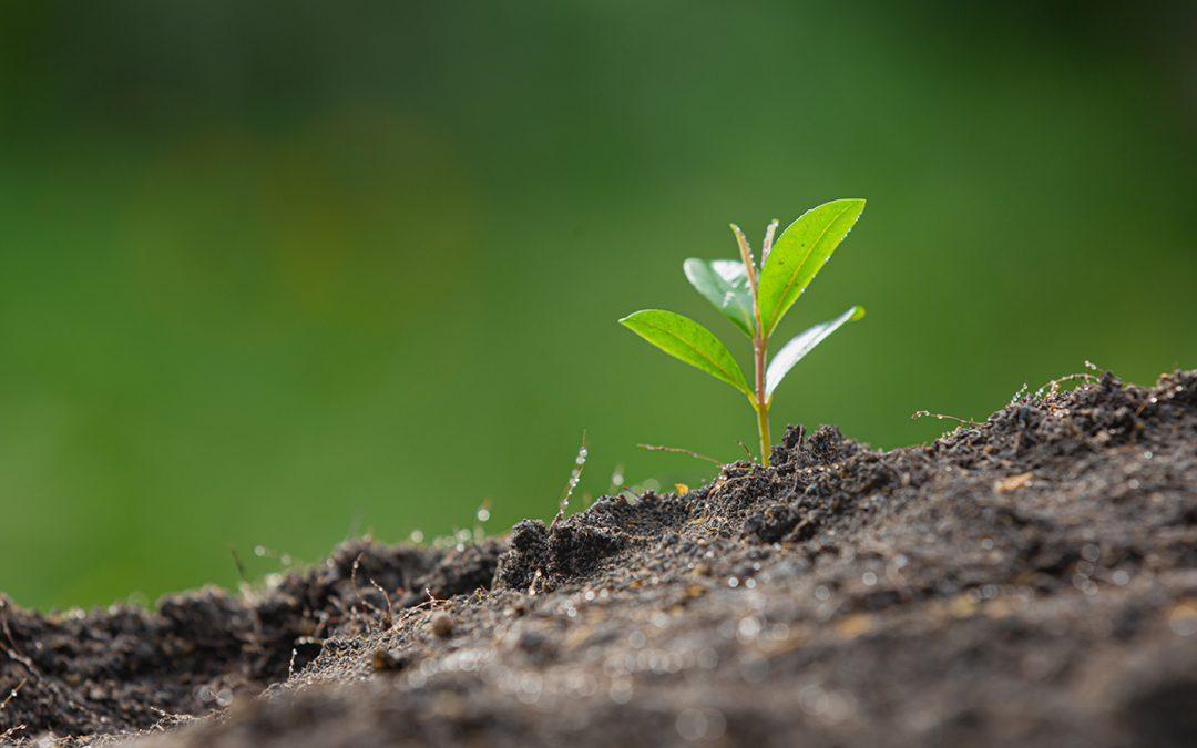 Postępuje degradacja gruntów rolnych