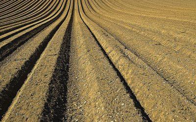 Leszczenko o rolniczym supermocarstwie