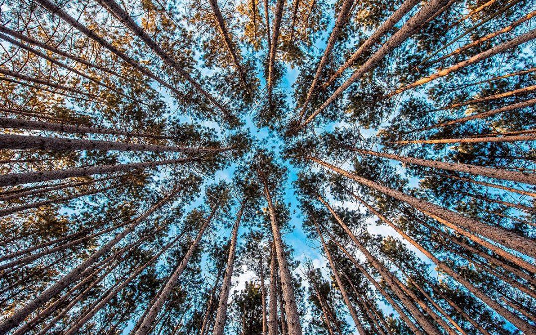 10 milionów drzew dla Ziemi