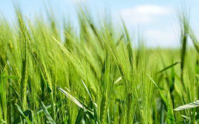 Zmiana warunków produkcji rolnej