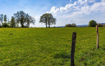 Sprzedano ponad 5 tys. hektarów ziemi