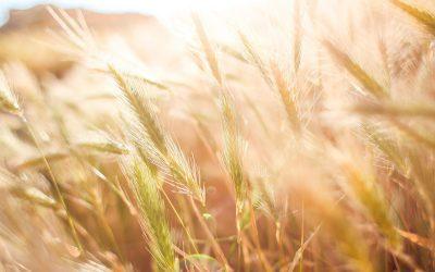Rosną koszty produkcji rolnej