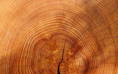 Eksport drewna w 2022 ?