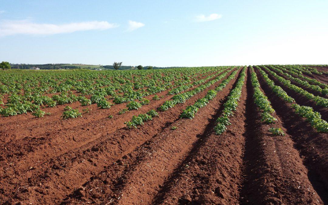 100 dni rynku gruntów rolnych